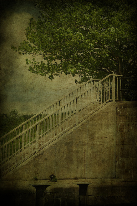 stairway under tree